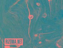 Rizoma: Afrofuturismo